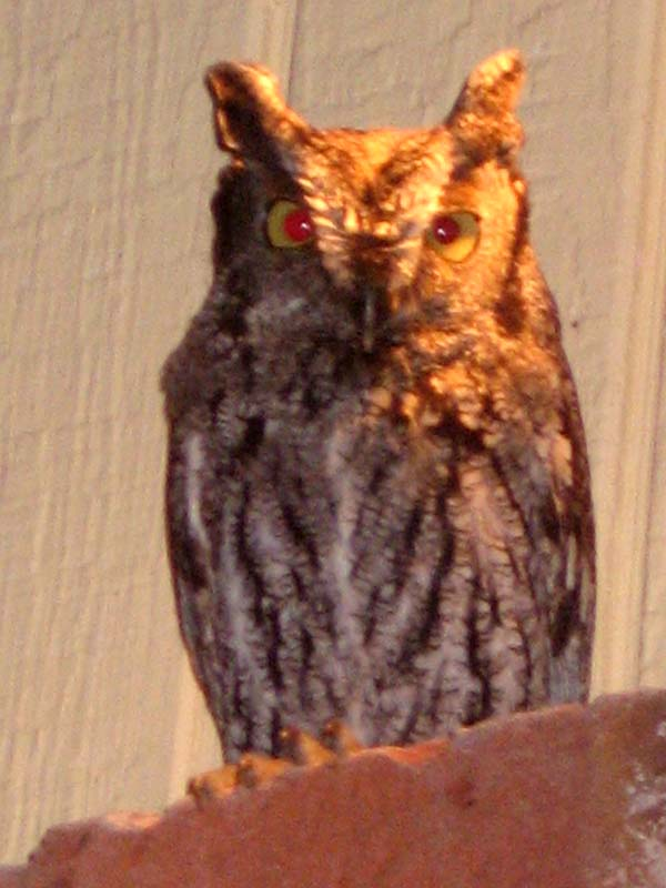 horned owl mendocino  rental cottage